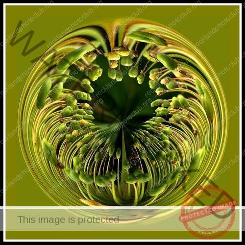 202 Debra Wallace_AbstractOpen Mind SALON COLOR_Flower Orb_9 Award