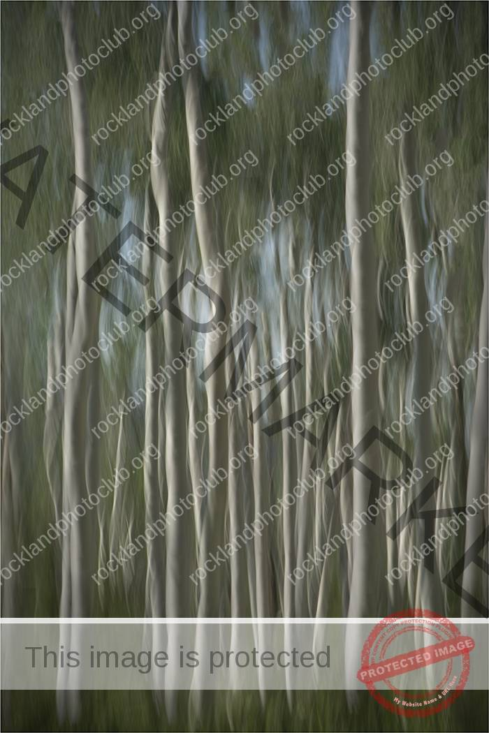 105 Pam Grafstein_All Things Considered SALON COLOR_Quaking Aspen Abstract_Award