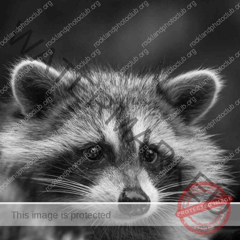 253-Csaba-Vadasz_All-Things-Considered-ADVANCED-MONOCHROME_Guest-of-the-garden-party_Award