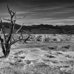 105 Pam Grafstein_Land, Sea, and Cityscapes SALON MONOCHROME_Moon Tree_8 Honorable Mention