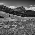105 Pam Grafstein_Land, Sea, and Cityscapes SALON MONOCHROME_Yellowstone Meadow_8 Honorable Mention