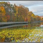 202 Debra Wallace_Land, Sea, and Cityscapes SALON COLOR_Congers Lake & walkway at autumn_8 Honorable Mention