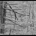 202 Debra Wallace_Land, Sea, and Cityscapes SALON MONOCHROME_Winter Trees at Harriman State Park_8 Honorable Mention