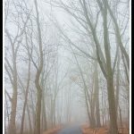 202 Debra Wallace_Pictorial #2 SALON COLOR_The Tree lined walkpath in the Fog_8 Honorable Mention
