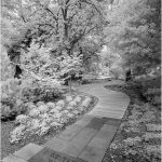 235 Ronny Mariano_Land, Sea, and Cityscapes SALON MONOCHROME_Winter Walk Garden (infrared)_8 Honorable Mention