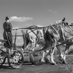 257 Andrea Swenson_Pictorial SALON MONOCHROME_Returning from the Fields_8 Honorable Mention