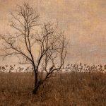 Piermont Marsh in Winter_Andrea B. Swenson