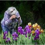 256 Jan Nazalewicz_People in Action ADVANCED COLOR_Woman Photographing Irises_8 Honorable Mention