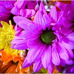 262 Linda Kontos_All Things Considered ADVANCED COLOR_Bouquet_Honorable Mention